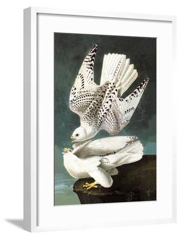 White Gyrfalcon-John James Audubon-Framed Art Print