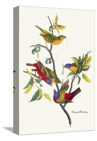 Painted Bunting-John James Audubon-Stretched Canvas Print