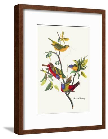 Painted Bunting-John James Audubon-Framed Art Print