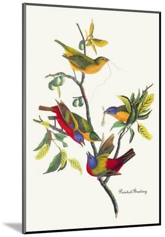Painted Bunting-John James Audubon-Mounted Art Print