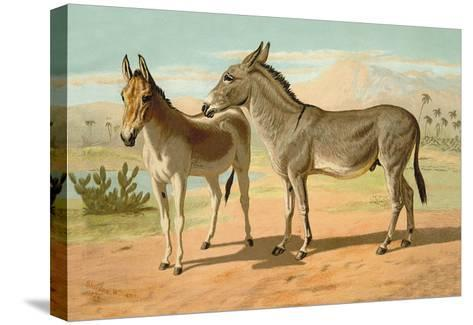 Abyssinian Male and Indian Onager Female-Samuel Sidney-Stretched Canvas Print
