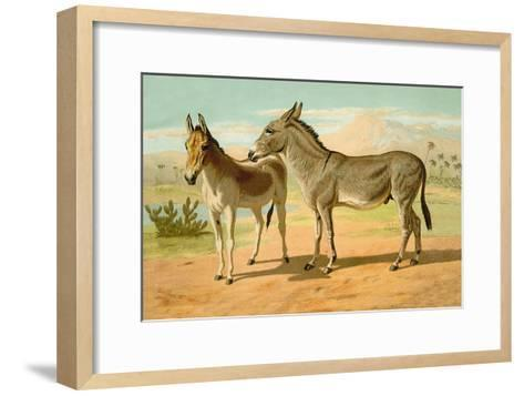 Abyssinian Male and Indian Onager Female-Samuel Sidney-Framed Art Print