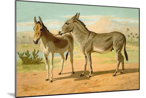 Abyssinian Male and Indian Onager Female-Samuel Sidney-Mounted Art Print