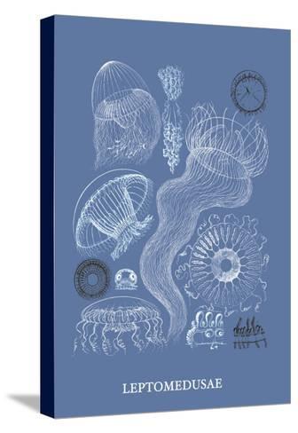 Jellyfish: Leptomedusae-Ernst Haeckel-Stretched Canvas Print