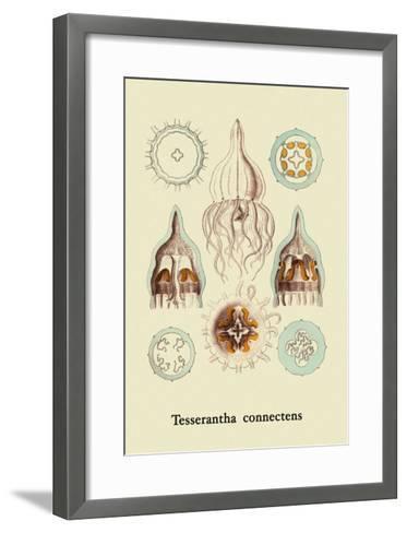 Jellyfish: Tesserantha Connectens-Ernst Haeckel-Framed Art Print