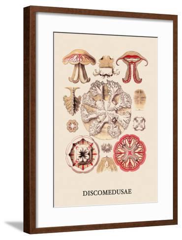 Jellyfish: Discomedusae-Ernst Haeckel-Framed Art Print