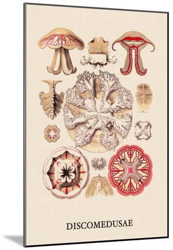 Jellyfish: Discomedusae-Ernst Haeckel-Mounted Art Print