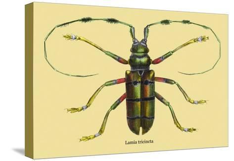 Beetle: Lamia Tricincta-Sir William Jardine-Stretched Canvas Print
