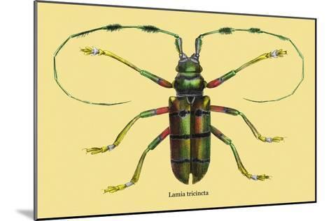 Beetle: Lamia Tricincta-Sir William Jardine-Mounted Art Print