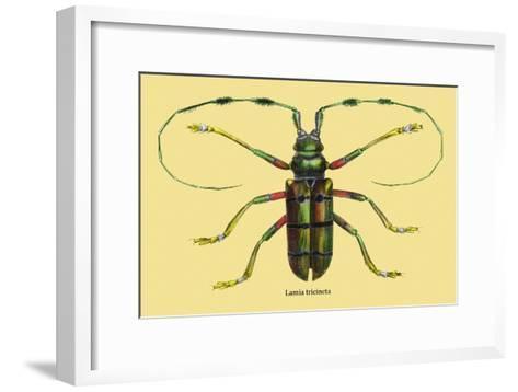 Beetle: Lamia Tricincta-Sir William Jardine-Framed Art Print