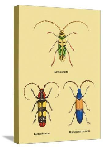 Beetles: Lamia Ornata, L. Formosa and Desmocerus Cyaneus-Sir William Jardine-Stretched Canvas Print