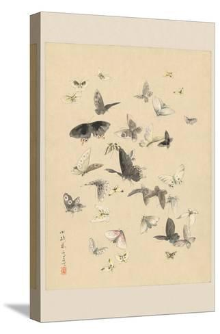 Butterflies--Stretched Canvas Print