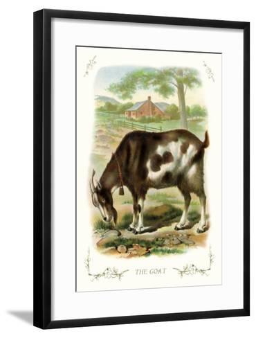 The Goat--Framed Art Print