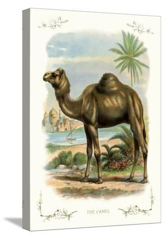 The Camel--Stretched Canvas Print