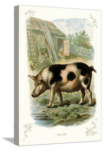 The Pig--Stretched Canvas Print