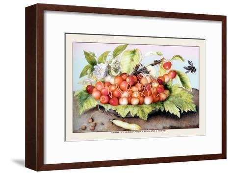 Dish of Cherries with a Bean and a Hornet-Giovanna Garzoni-Framed Art Print