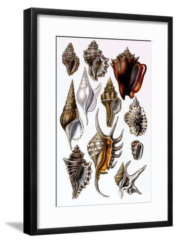 Shells: Trachelipoda-G^b^ Sowerby-Framed Art Print
