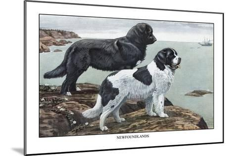 Two Newfoundlands-Louis Agassiz Fuertes-Mounted Art Print