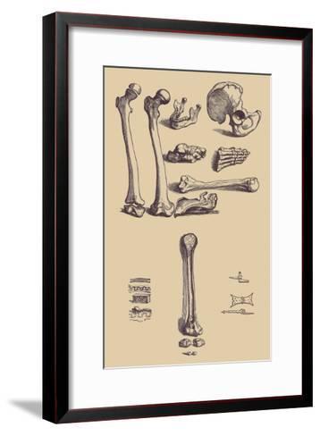 Bones with Tools-Andreas Vesalius-Framed Art Print