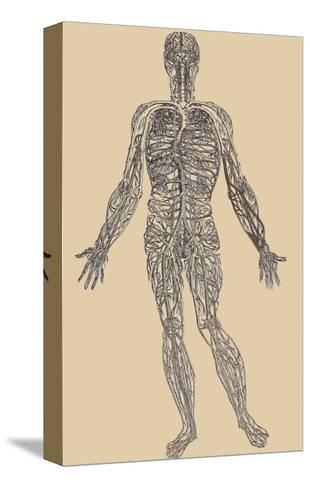 Nervous System-Andreas Vesalius-Stretched Canvas Print