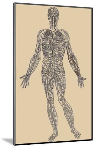 Nervous System-Andreas Vesalius-Mounted Art Print