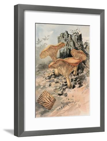 Canthareius Cibarius-William Hamilton Gibson-Framed Art Print