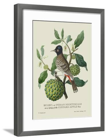 Indian Nightingale-J^ Forbes-Framed Art Print