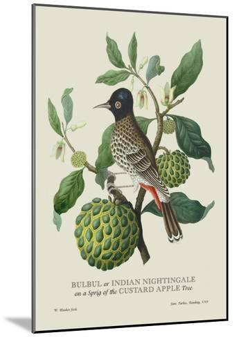 Indian Nightingale-J^ Forbes-Mounted Art Print