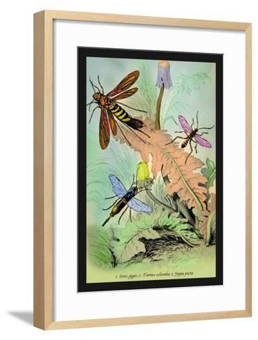 Insects: Sirex Gigas, Tremex Columba and Joppa Picta-James Duncan-Framed Art Print