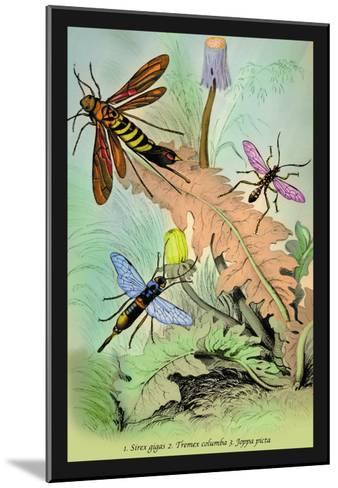 Insects: Sirex Gigas, Tremex Columba and Joppa Picta-James Duncan-Mounted Art Print