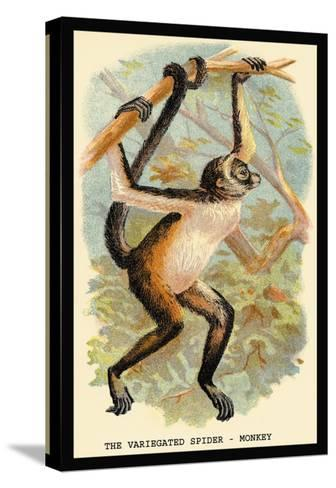 The Variegated Spider-Monkey-G.r. Waterhouse-Stretched Canvas Print