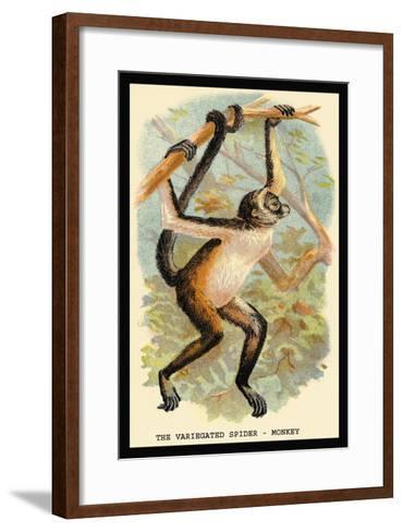 The Variegated Spider-Monkey-G.r. Waterhouse-Framed Art Print