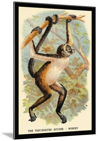 The Variegated Spider-Monkey-G.r. Waterhouse-Mounted Art Print