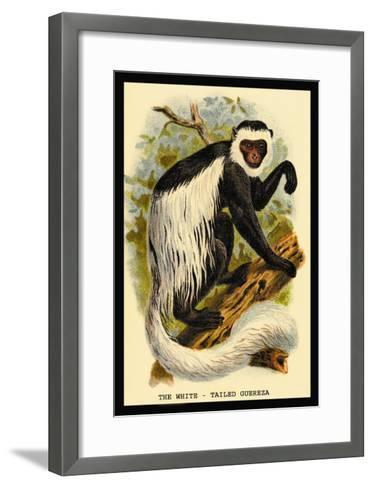 The White-Tailed Guereza-G.r. Waterhouse-Framed Art Print