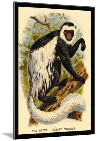 The White-Tailed Guereza-G.r. Waterhouse-Mounted Art Print