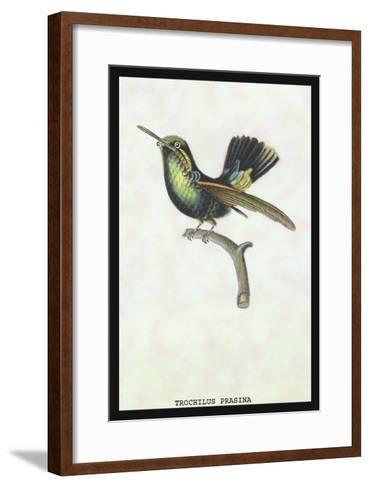 Hummingbird: Trochilus Prasina-Sir William Jardine-Framed Art Print