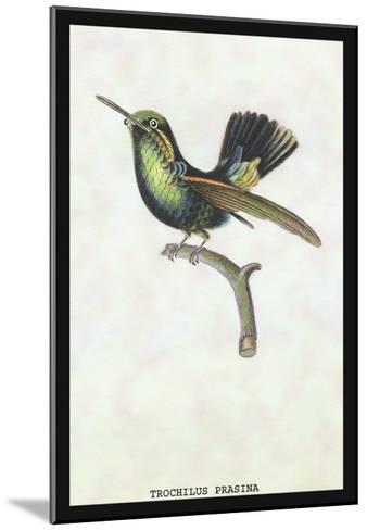 Hummingbird: Trochilus Prasina-Sir William Jardine-Mounted Art Print