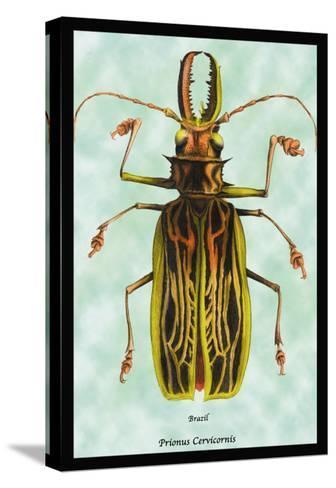 Beetle: Brazilian Prionus Cervicornis-Sir William Jardine-Stretched Canvas Print