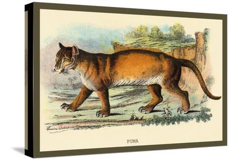 Puma-Sir William Jardine-Stretched Canvas Print