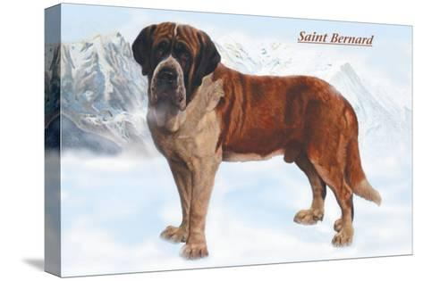 Smooth Coated Saint Bernard--Stretched Canvas Print