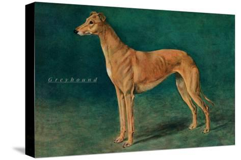 Coursing Greyhound--Stretched Canvas Print