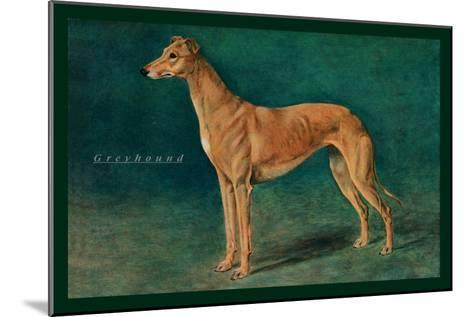 Coursing Greyhound--Mounted Art Print