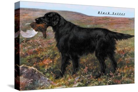 Black Setter--Stretched Canvas Print