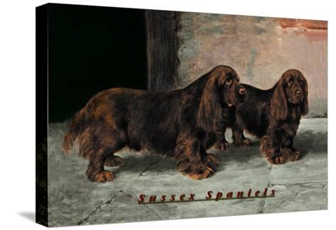Two Champion Sussex Spaniels--Stretched Canvas Print