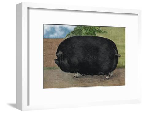 Champion Sow--Framed Art Print