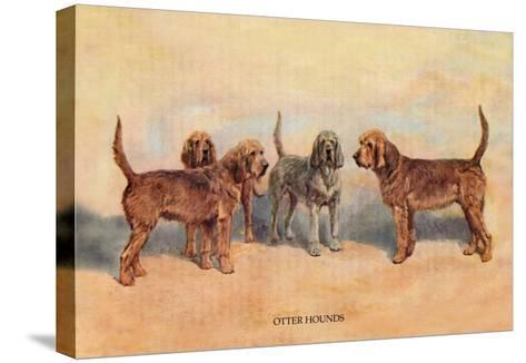 Otter Hounds-Thomas Ivester Llyod-Stretched Canvas Print