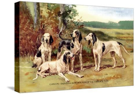 Gascon-Saintongeois Hounds of the Virelade Type-Baron Karl Reille-Stretched Canvas Print