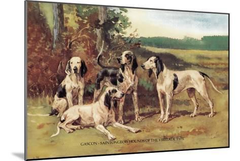 Gascon-Saintongeois Hounds of the Virelade Type-Baron Karl Reille-Mounted Art Print