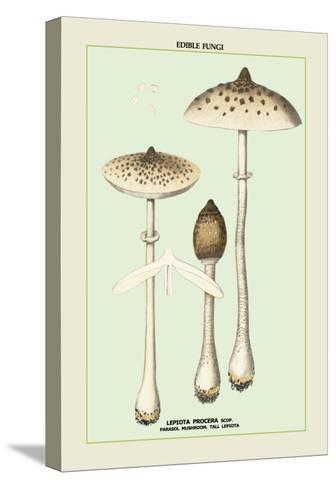 Edible Fungi: Parasol Mushroom--Stretched Canvas Print