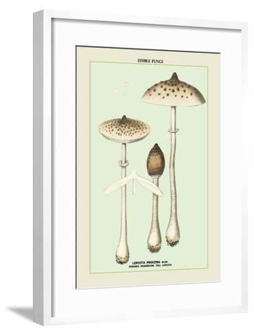 Edible Fungi: Parasol Mushroom--Framed Art Print